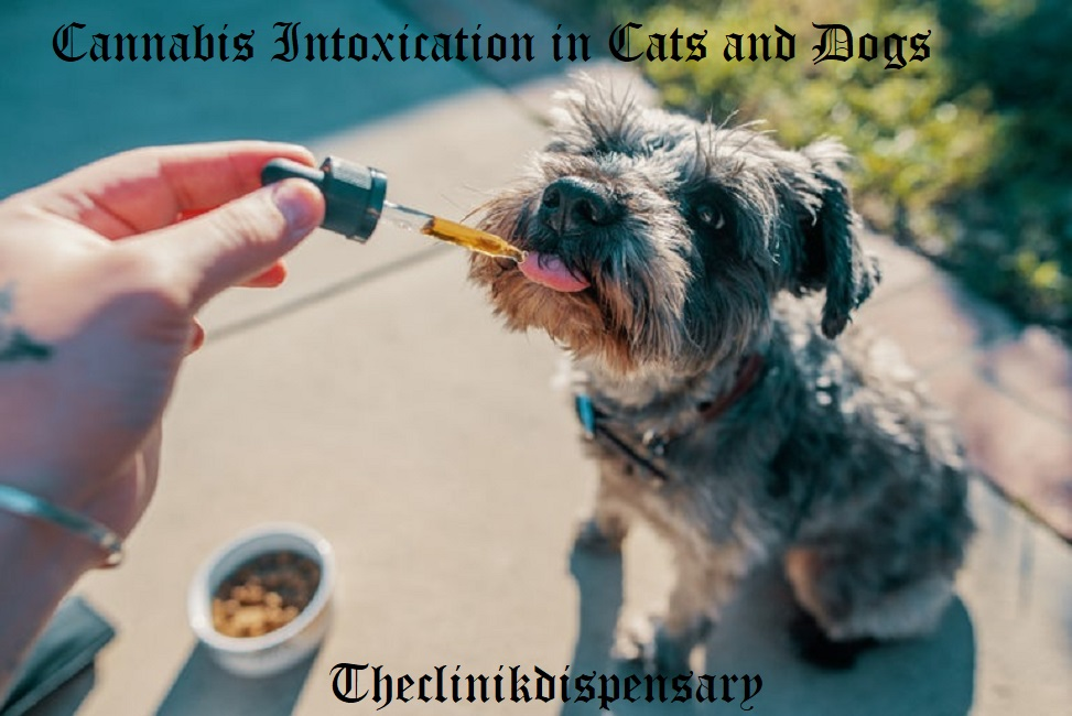 Cannabis Intoxication in Cats and Dogs