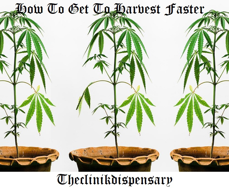 How To Get To Harvest Faster
