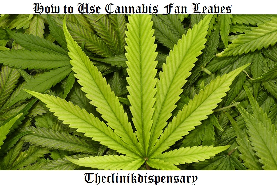 How to Use Cannabis Fan Leaves