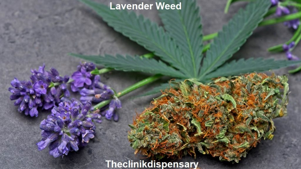 lavender weed