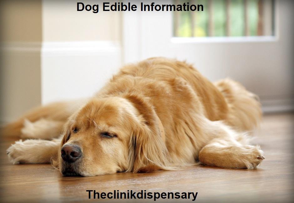 dog edible